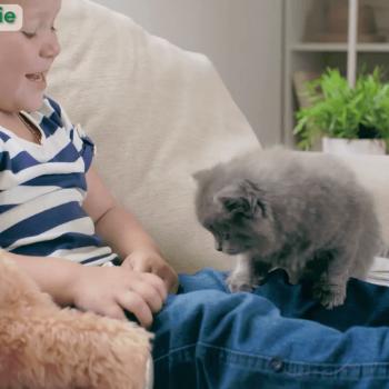 Рекламно видео на онлайн магазин за домашни любимци 10