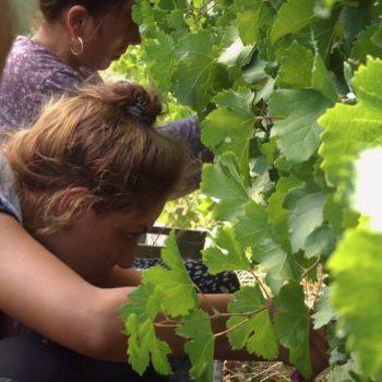 Рекламен филм за винарна Беса Вали (Bessa Valley) 21