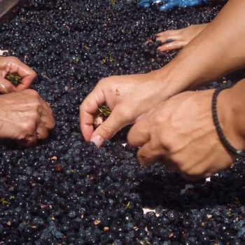 Рекламен филм за винарна Беса Вали (Bessa Valley) 25