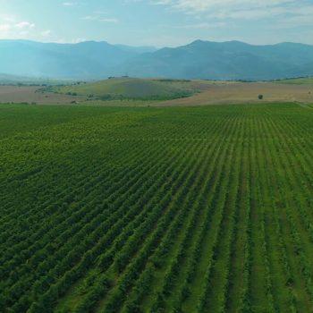 Рекламен филм за винарна Беса Вали (Bessa Valley) 5