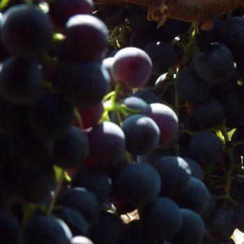 Рекламен филм за винарна Беса Вали (Bessa Valley) 6