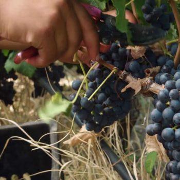 Рекламен филм за винарна Беса Вали (Bessa Valley) 8