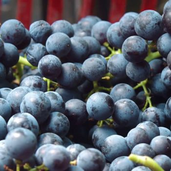 Рекламен филм за винарна Беса Вали (Bessa Valley) 9
